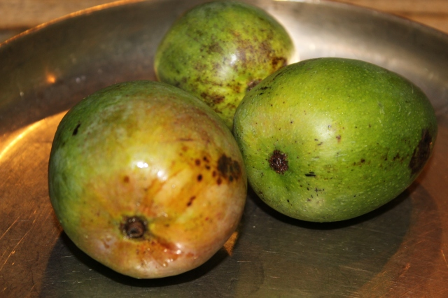 Three little green mangoes