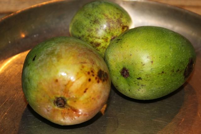 Three little green mangoes